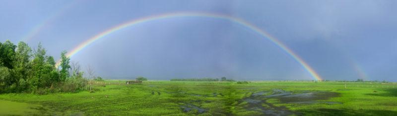pana-rainbow